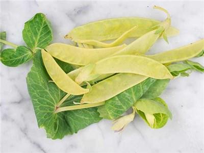 Peas-Snow-Peas-Golden-Sweet-SN104-web