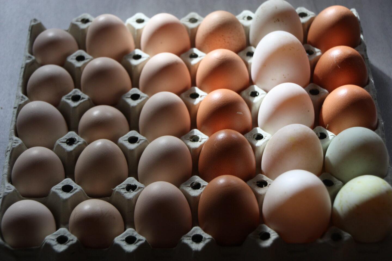 saltede tørrede æggeblommer